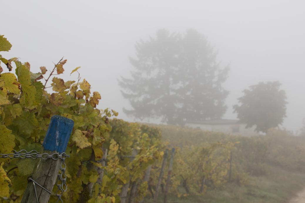 (©) Arnold Mechnich - Nebelstimmung