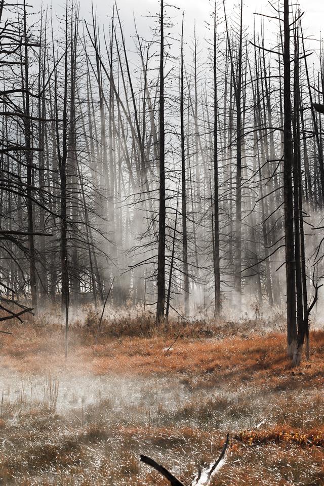 (©) Bernd Beisel - Nebelstimmung