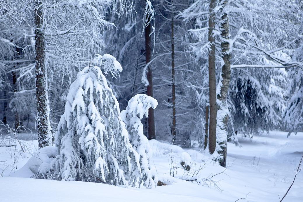 (©) Bernd Beisel - Winter