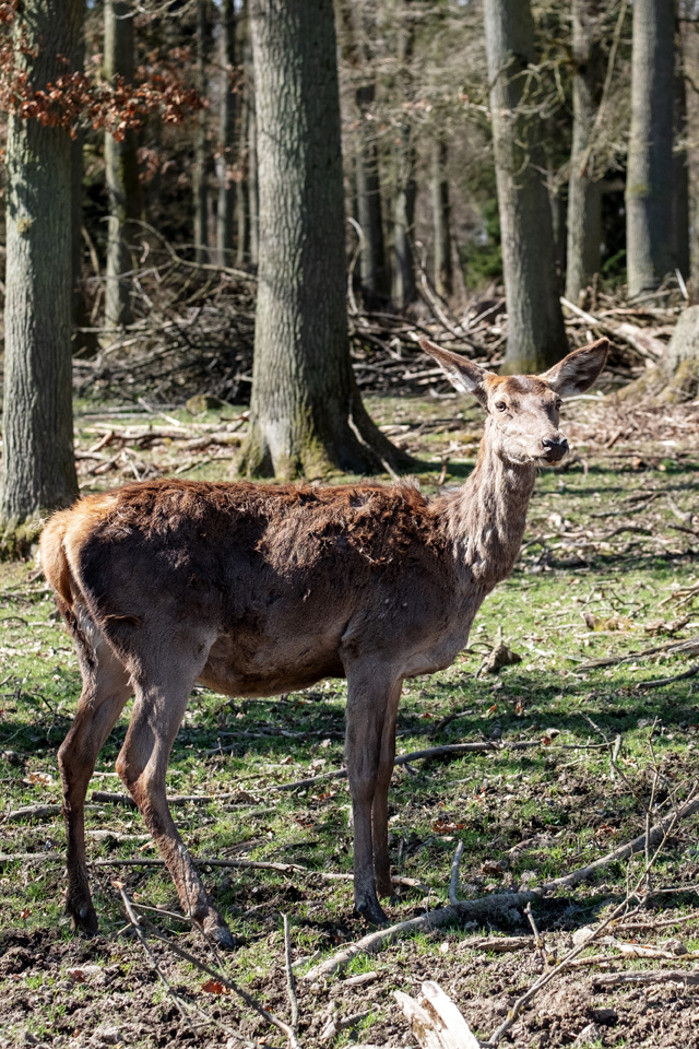 (©) Ralf Krabsch - Hochwildschutzpark