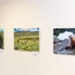 Fotoausstellung Johanneshaus in Nierstein, Tierisches aus aller Welt