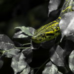 Reptilium in Landau