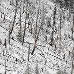 Yellowstone-Nationalpark / Rocky Mountains, Vereinigte Staaten von Amerika