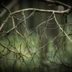 Waldeslust