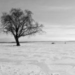Einzelner Baum im Schnee