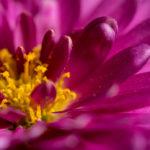 Blumen Makrofoto