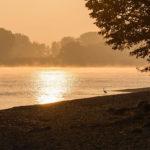 Rheinauen bei Oppenheim im Morgennebel