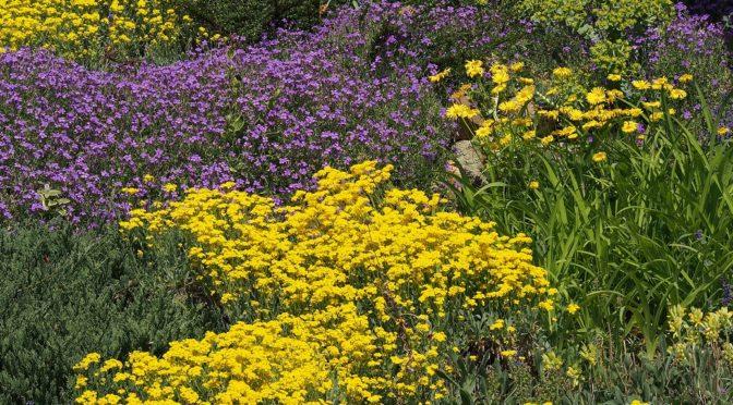 (©) Wolfgang Hoffmann - Blumen und Blüten